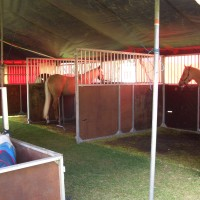 Horses tethered to the outside of their stables at Zippos circus.