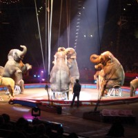 Ringling Brothers and Barnum & Bailey Circus.