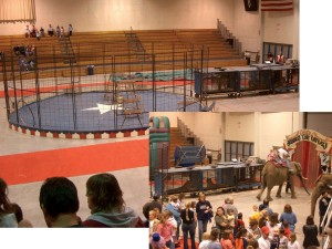 B & C:  Shrine Circus, Minnesota Tigers wait to perform – there is no netting over the ring cage.  Many question the safety of elephant rides, yet an elephant carrying children is walked next to the caged tigers, where there is an increased risk of the elephant being spooked.