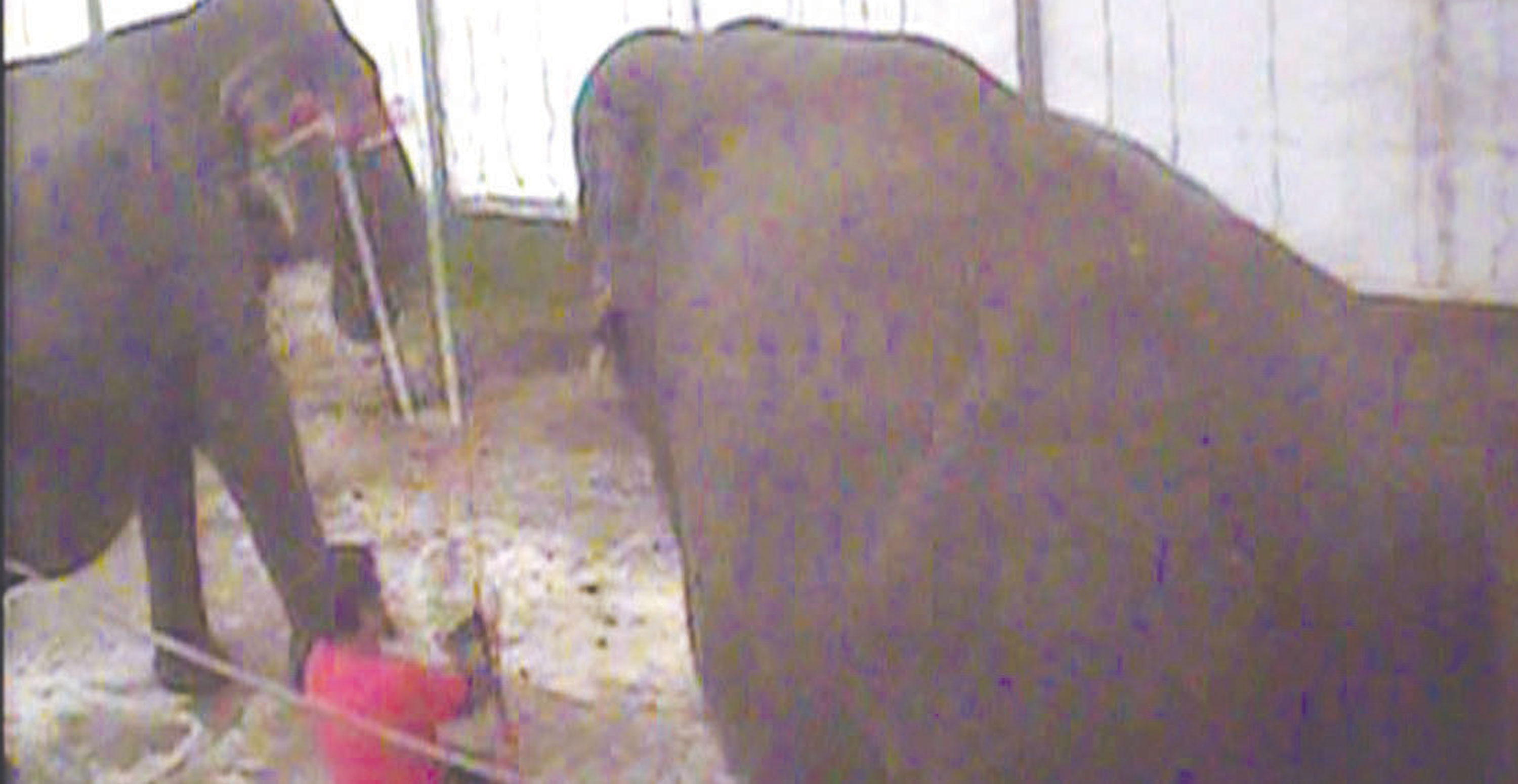 Great British Circus elephant abuse