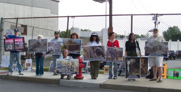 Faun Protests Against Cole Bros Circus In Garfield Nj Stop Circus Suffering