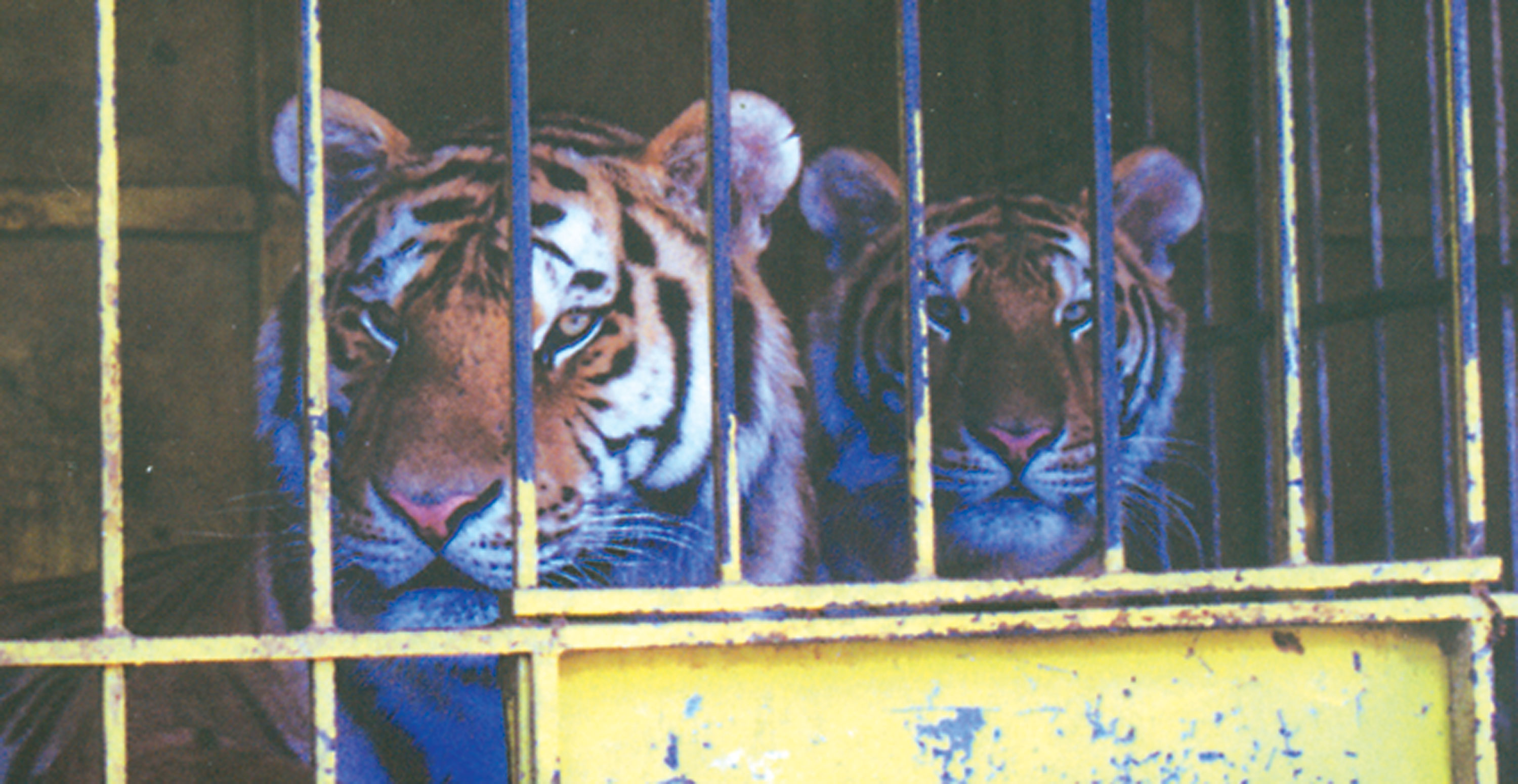 The abuse and misery inside Greek circuses