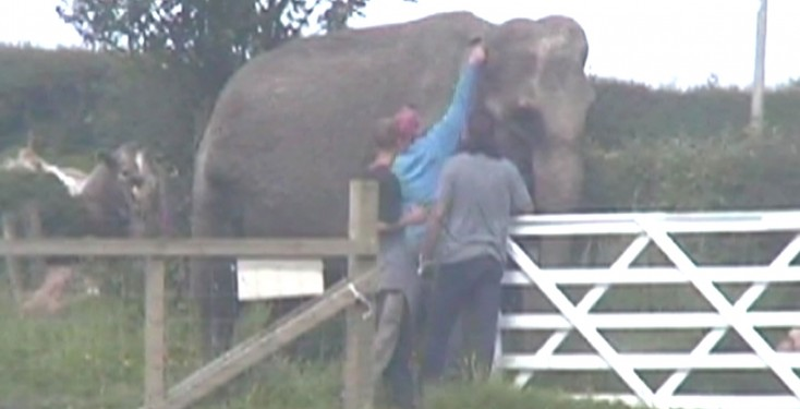 Using hook on Anne the elephant