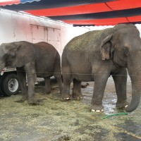 Krissy and Boo with Bailey Brothers Circus.