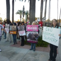 Ringling Circus met by hundreds protesting in Southern California