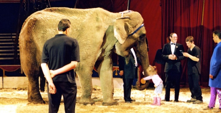 Anne the elephant in the ring