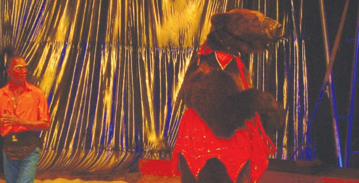 US circus bear in Itagui