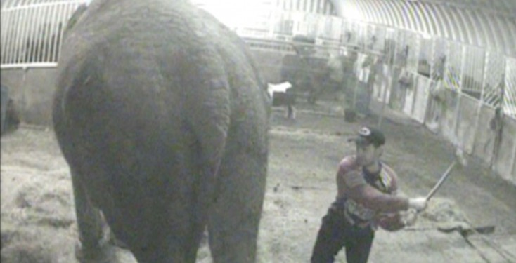 Bobby Roberts Super Circus elephant abuse