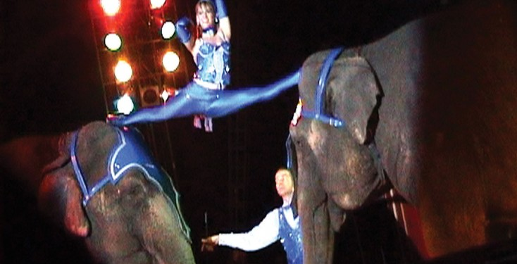 GBC elephants performance