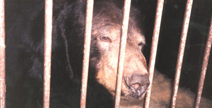 Harry the bear used in circuses TV etc, at permanent quarters