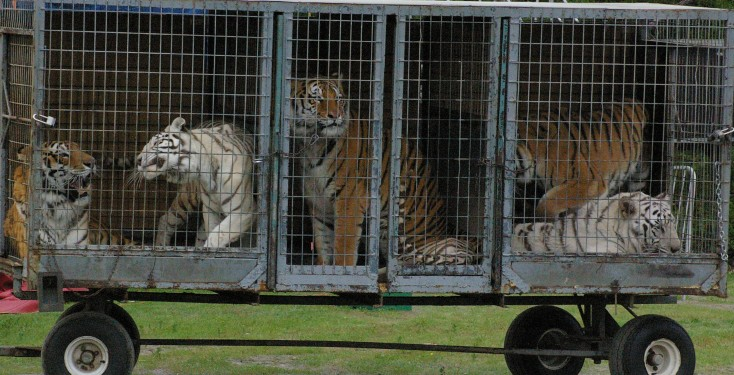 argument for use of animals in the circus Answers needed over mp's contribution to circus debate share  it is morally acceptable to use animals (for  attempted to make an argument against a.