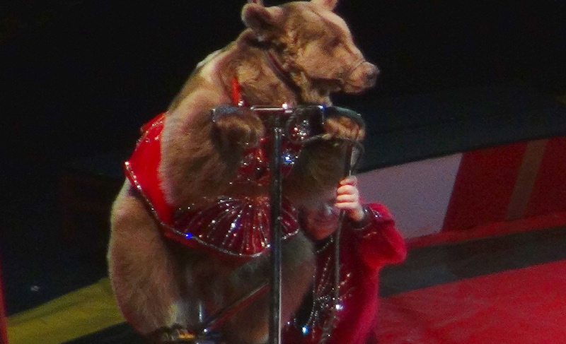 Hawaii is second US state to ban wild animal acts! - Stop Circus Suffering