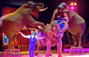 """AFRICAN and ASIAN ELEPHANTS presented by LARS AND CHRISTINE HOLSCHER bring a glamorous, artistic and tender presentation with elephants Sonja, Vana Mana and Dehli. """"Like children, the elephants always come first!"""" says Lars."""
