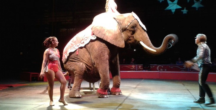 Honda Of Conyers >> Nosey, and all animals, suffer in circuses