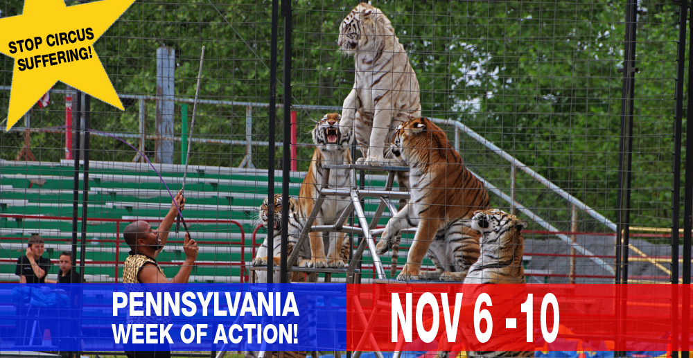 Scs Web Page Pa Week Of Action Stop Circus Suffering