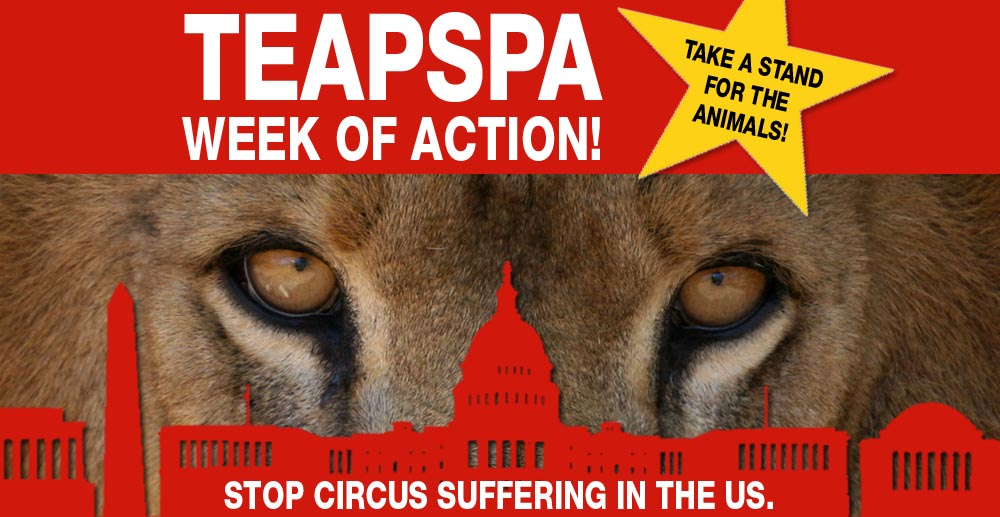 Scs Web Page Teapspa2 Week Of Action Stop Circus Suffering