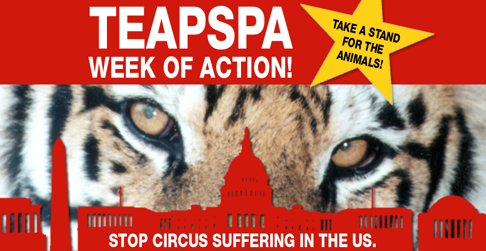Scs Web Page Teapspa Week Of Action 3 Stop Circus Suffering