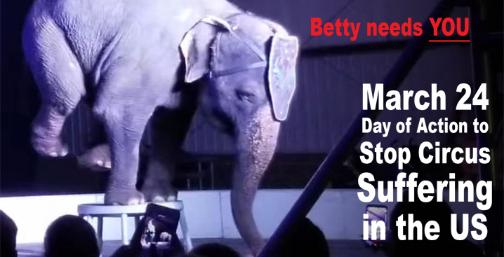 Betty the elephant performs a handstand on a stool.